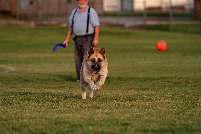 How to teach a dog to fetch: an exercise in loyalty and playfulness