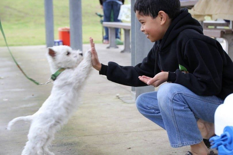 High five with a dog