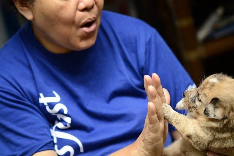 Teach your dog to do a high five