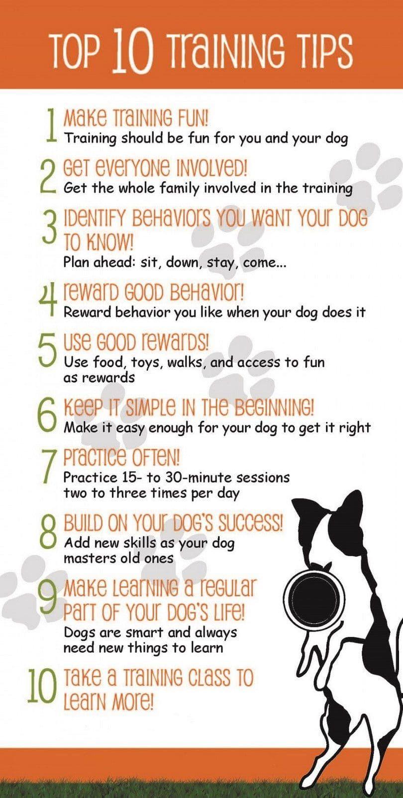 Top ten tips on dog training