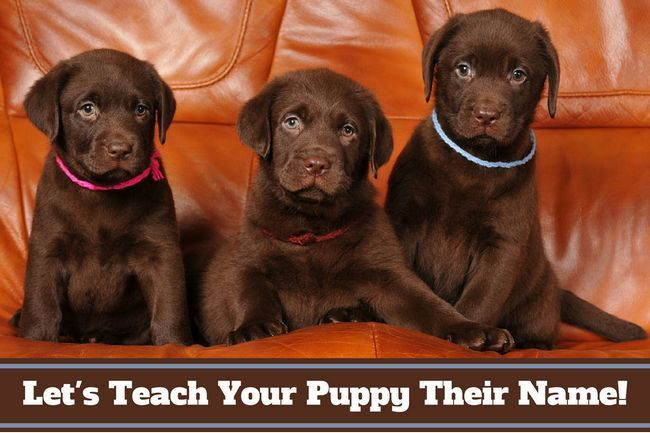How to teach a puppy their name – and how you should use it