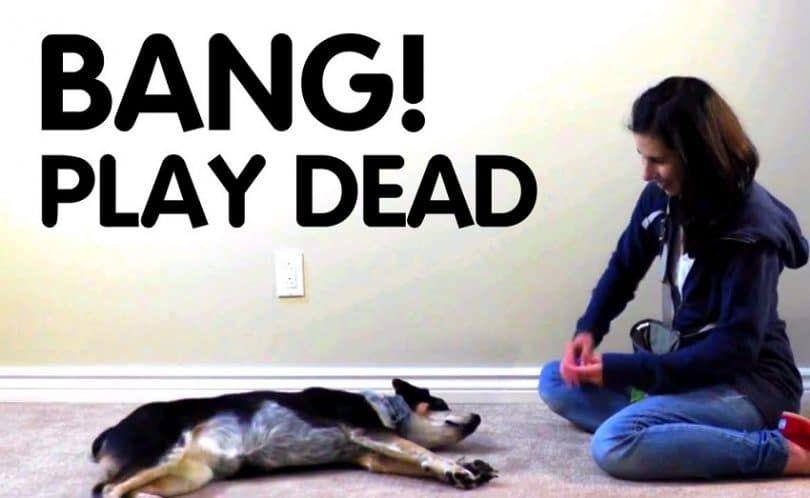 Teach Your Dog to Play Dead