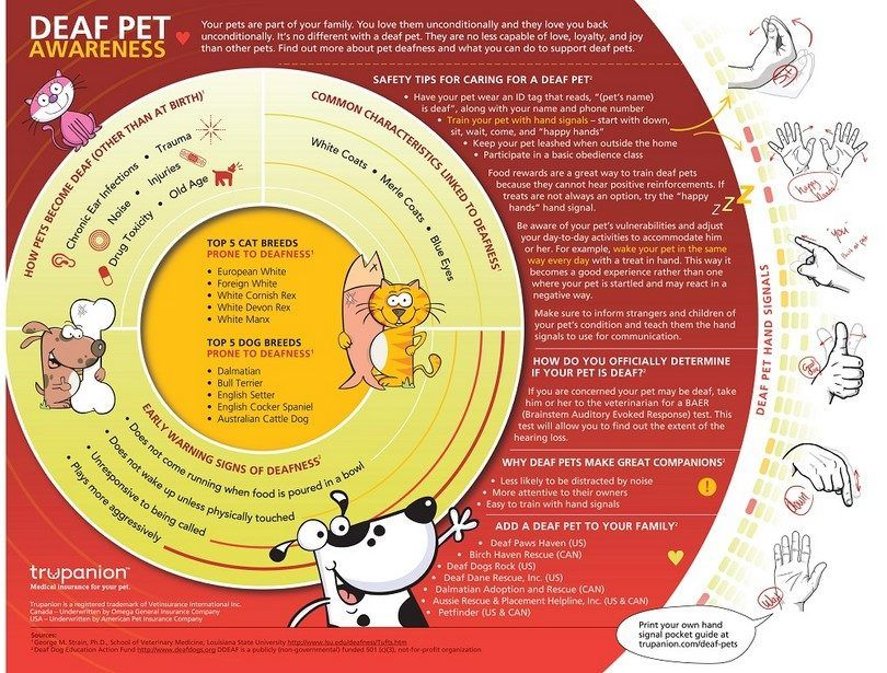 Deaf dog awareness