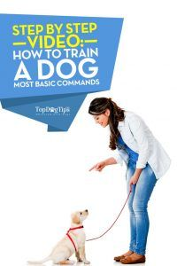How to train a dog basic commands: a step-by-step video guide