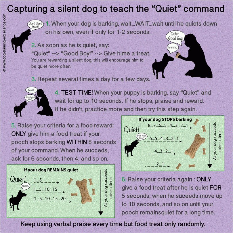 How to train a dog not to bark: top methods that will work