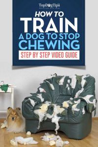 How to train a dog to stop chewing: a video guide