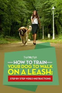 How to train a dog to walk on a leash: a video guide