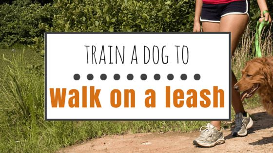 How to train a dog to walk on a leash
