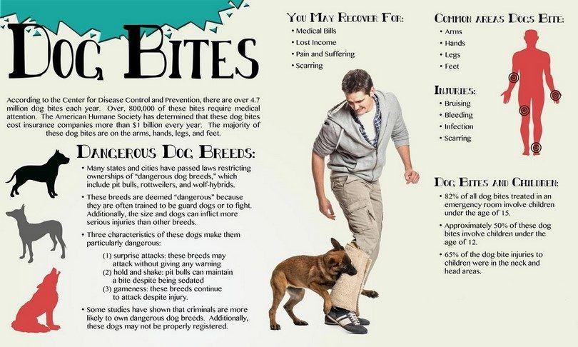 Dog bites infogrpahic