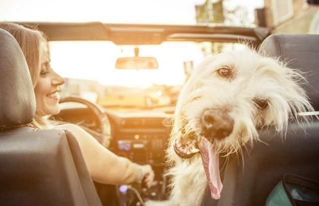 How to travel with your dog without completely losing your mind