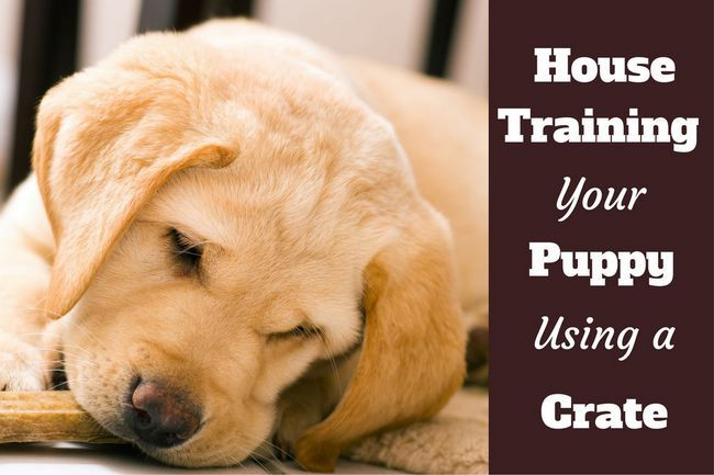 How to use a crate to house train a puppy