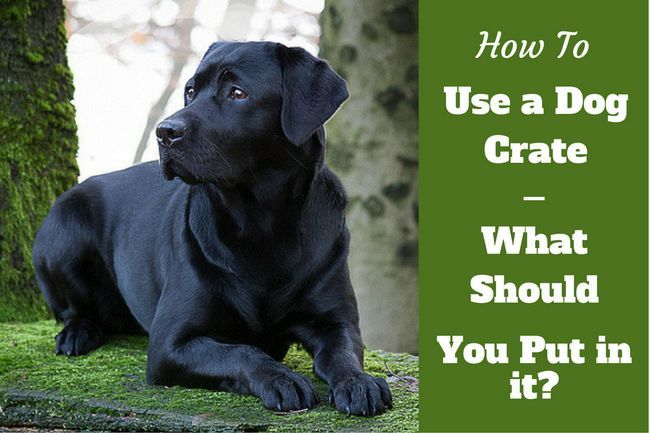 How to use a dog crate – when and when not to crate your dog