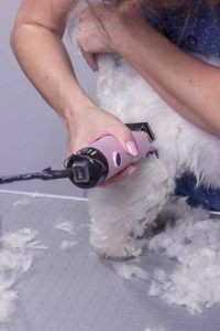 How to use dog clippers to trim or cut dog's hair