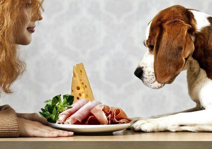 Dog wants human food