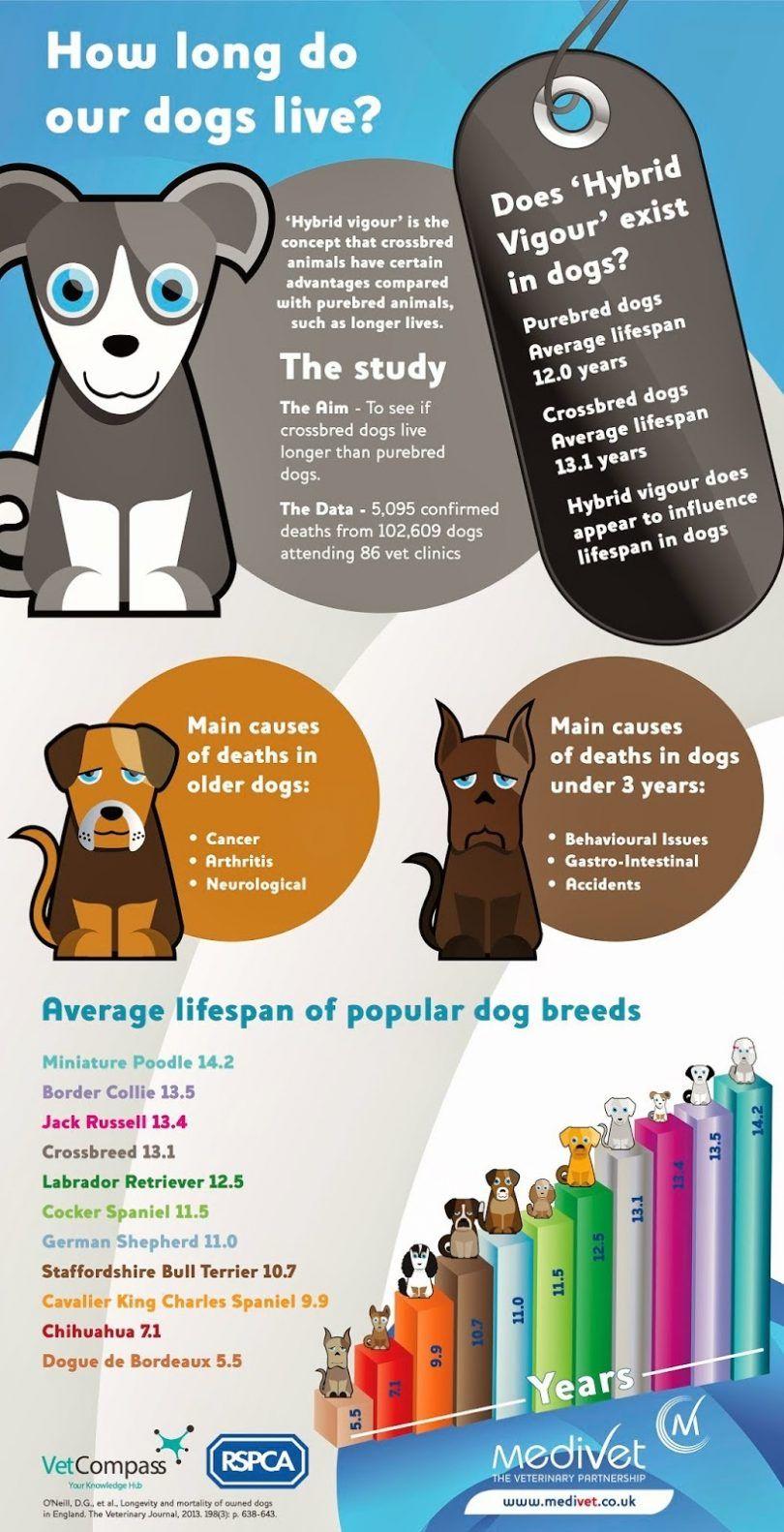 Hybrid dogs live
