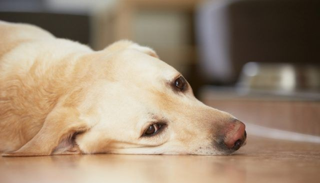 If you don't believe dogs have feelings, look at these photos