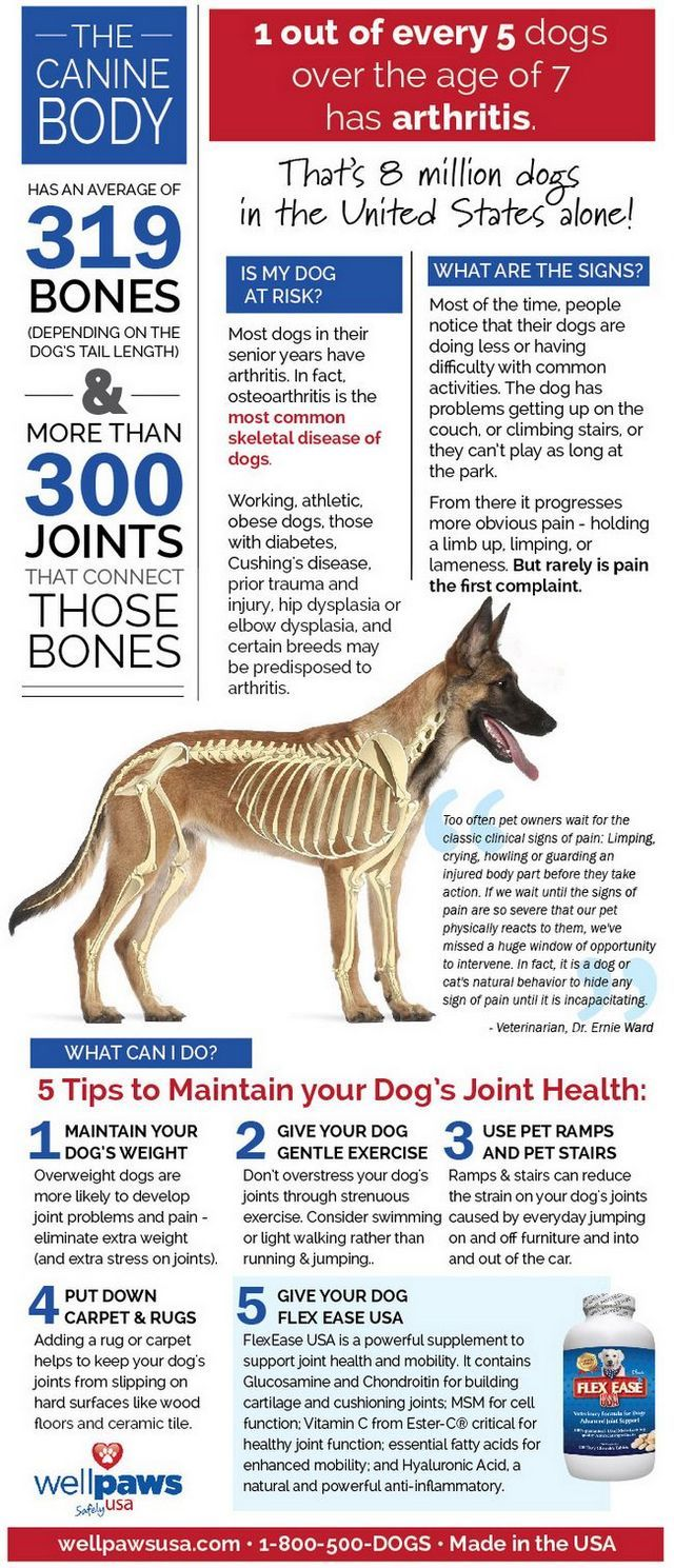 Infographic: caring for your dog's joints