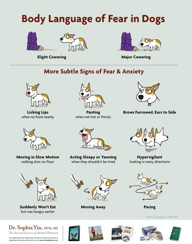 Infographic: the body language of fear in dogs