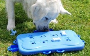 Interactive Puzzle Toys for Dogs