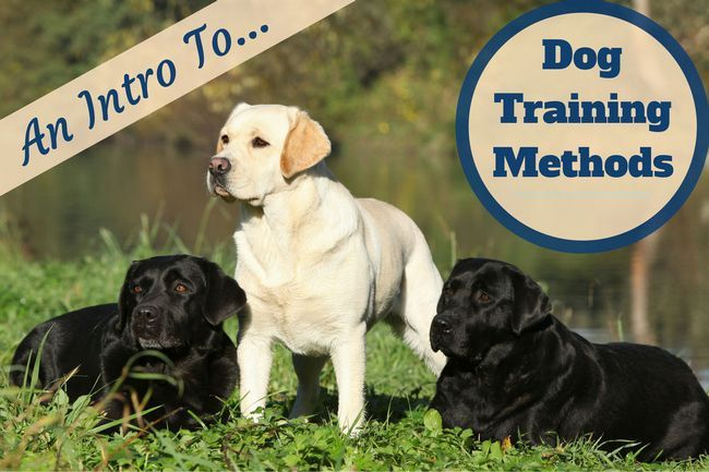 Introduction to dog training methods and techniques