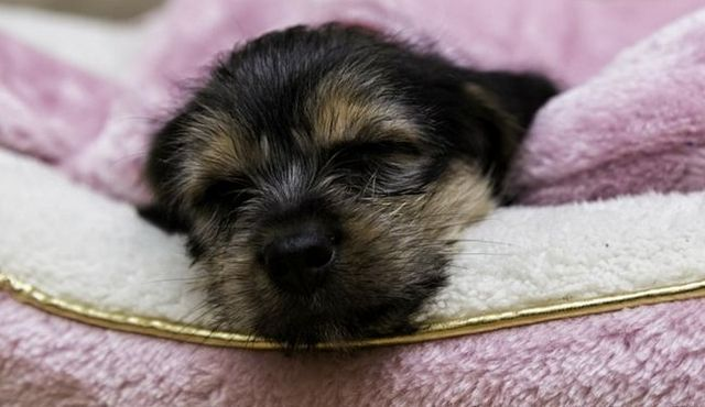 Is a puppy night light an effective sleep aid?