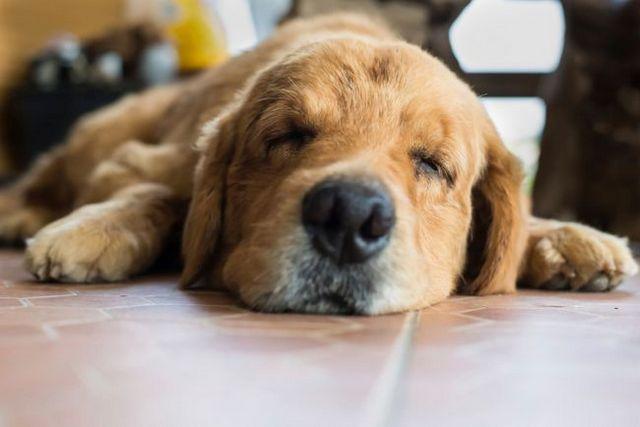 Is my dog having a seizure?