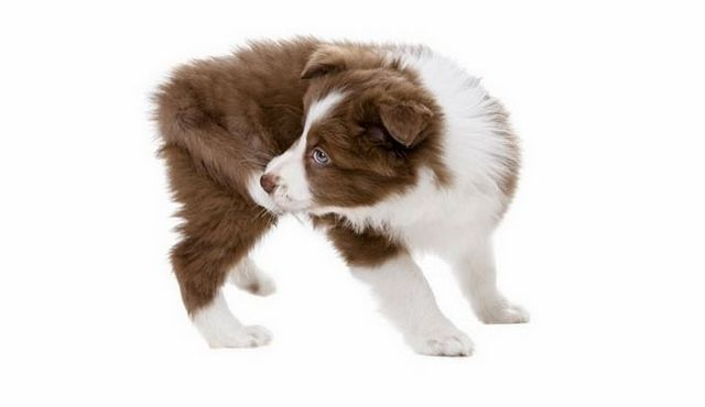 Is your dog biting tail? Reasons for you to chomp on