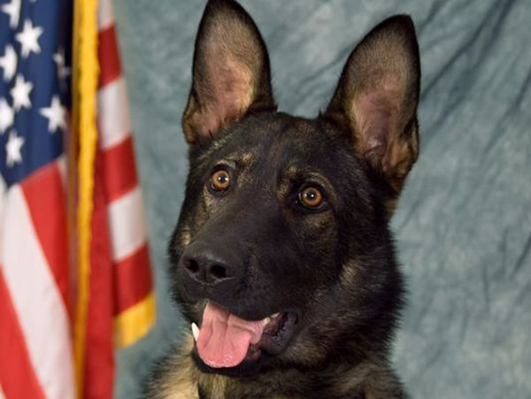 K9 officer dies of heat stroke in the back of hot patrol car