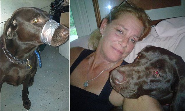 'Katie brown' found guilty, sentenced for animal abuse for duct taping dog's muzzle