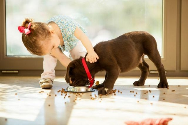 Keeping dogs and kids safe together
