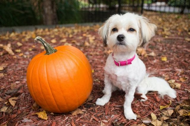 Keeping your dog (and your kids) safe on halloween