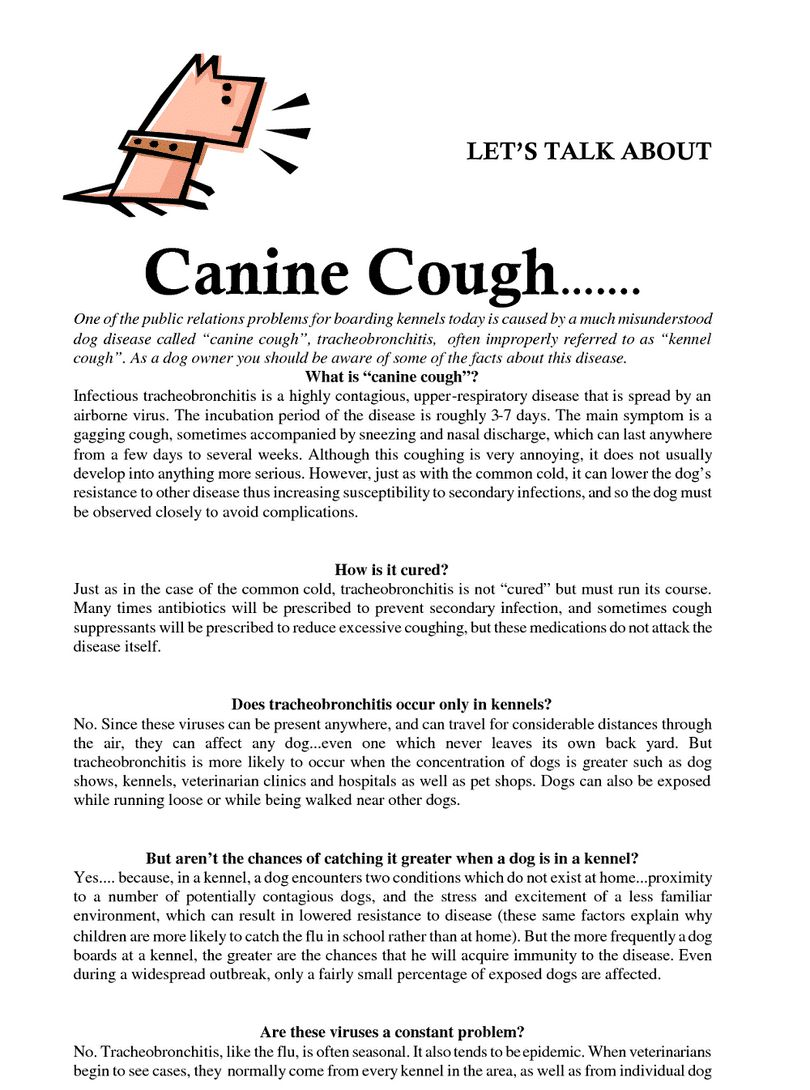 Kennel cough in dogs: symptomes, causes and treatment