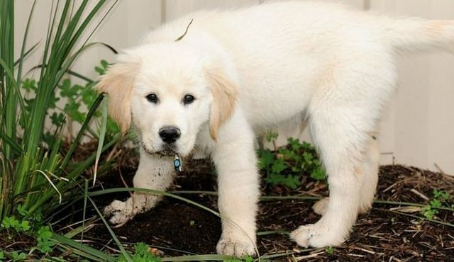 Lawn protection: how to stop a dog from digging