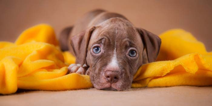 Dog Breed Specific Legislation and Restrictions