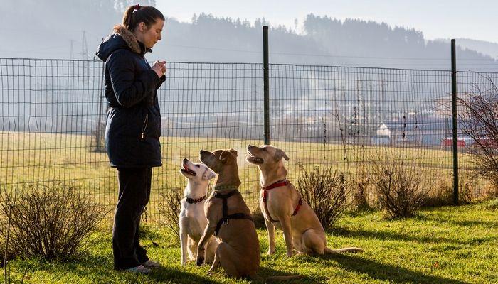 Let's talk: volunteering to help dogs