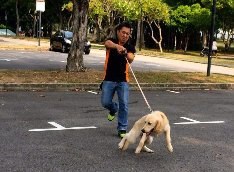 Dog pulling