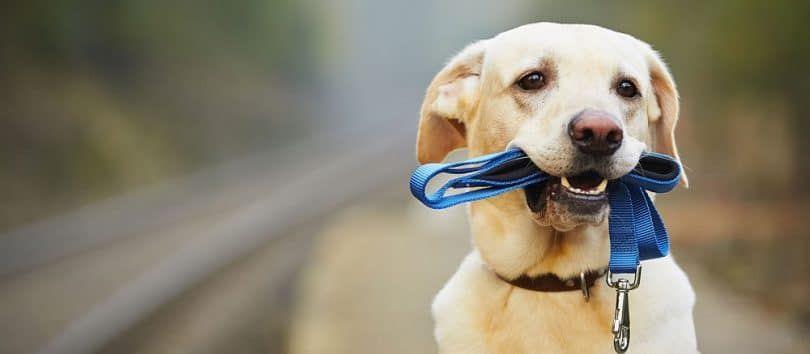 Dog discipline