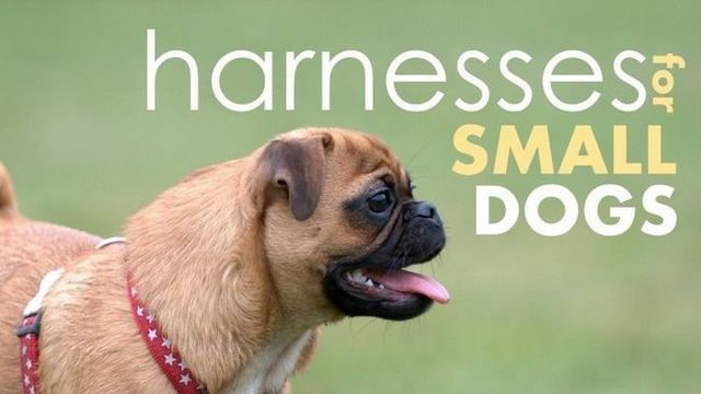 Looking for a dog harness for small dogs? We've gottem…