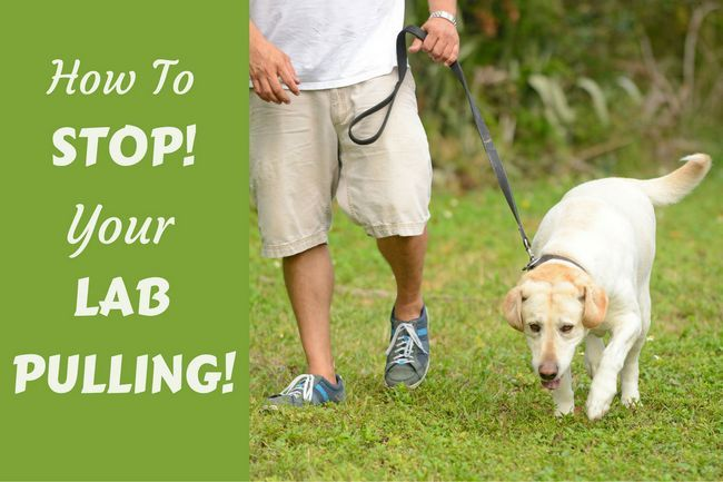 Loose leash walking: how to stop your dog pulling on leash