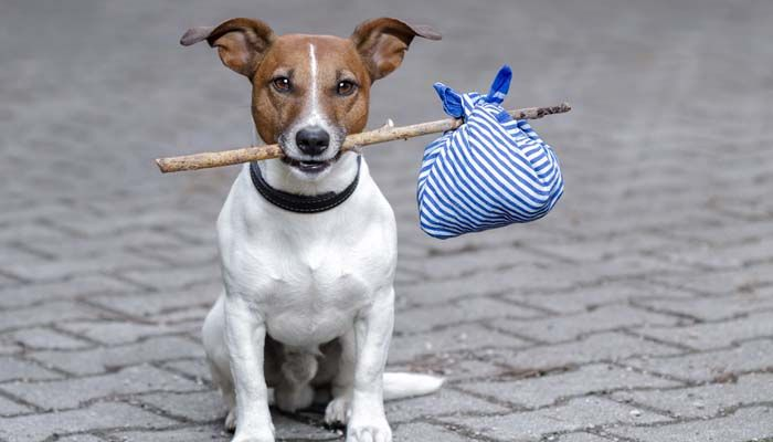 Lost dog: how to cope with every dog owner's worst nightmare