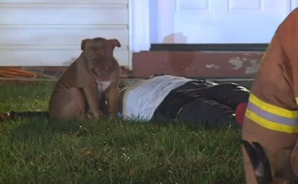 Loyal pit bull that stood guard over injured owner removed from the family she loves