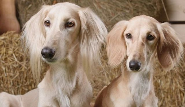 Male vs. Female dogs: is there a difference (apart from the obvious)?