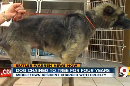 Man abuses dog for 4 years, gets $25 fine