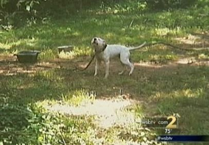 Man arrested after rescuing tethered dog on a hot day