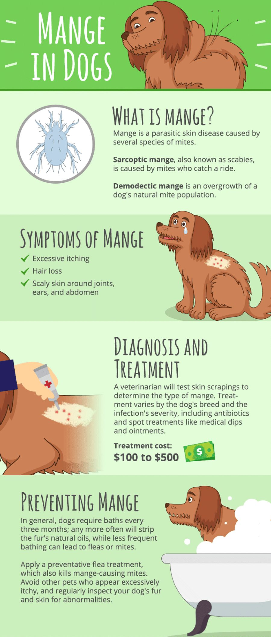 Mange on dogs: everything you need to know about it