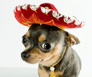 Meet the dogs of mexico!