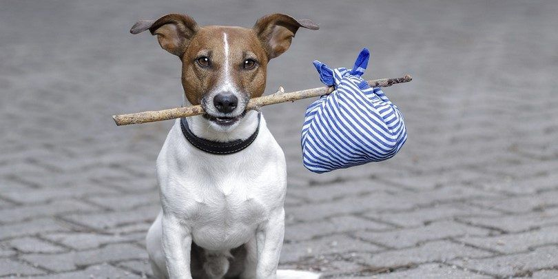 Microchips and identification tags: don't lose track of your dog