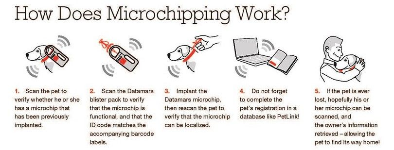 How does microchipping work