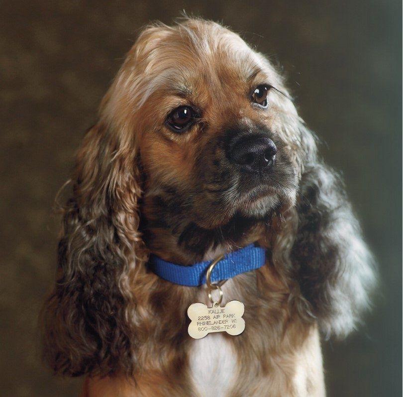 Dog collar tag