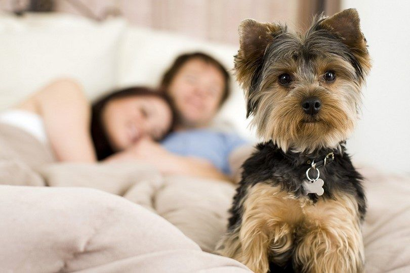 Happy dog at home